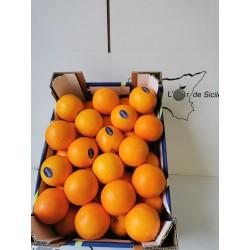 Oranges Moyennes (Plus...